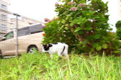 【カメネコ vol.6】疾走感あふれる姿にカメラが追いつかない俊敏ニャンコ。