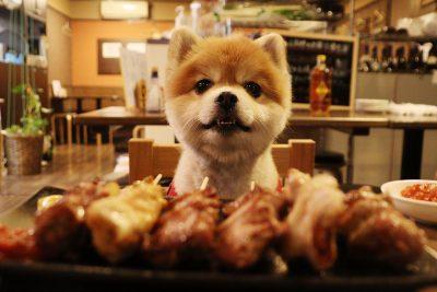 【後編】犬同伴可能な居酒屋?犬ライターぽちの亀戸さんぽ
